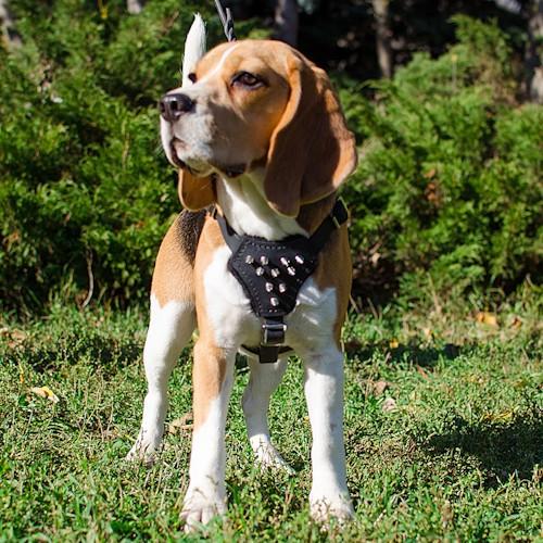 Harnais de dressage «Majesté» pour petit chien - H23