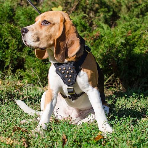 Harnais en cuir aurores bor ales pour petit chien pas - Site pour chien pas cher ...