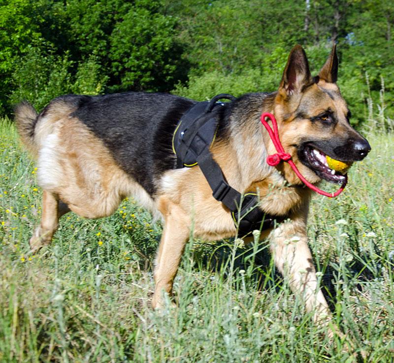 Balle dure avec corde pour chien Berger Allemand - TT1