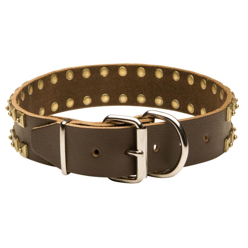Collier original de promenade en cuir pour chien c99 - Collier pour chien original ...