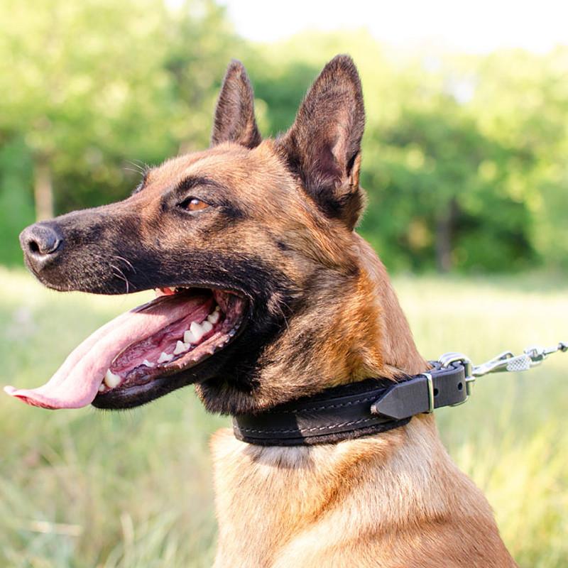 Collier en cuir avec doublure en feutre pour jeune chien