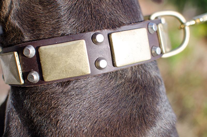 collier en cuir avec rivets m tallis s pour chien pitbull. Black Bedroom Furniture Sets. Home Design Ideas