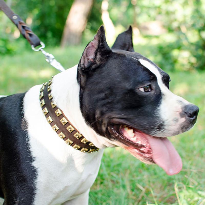 Collier original en cuir pour chien amstaff c99 - Collier pour chien original ...