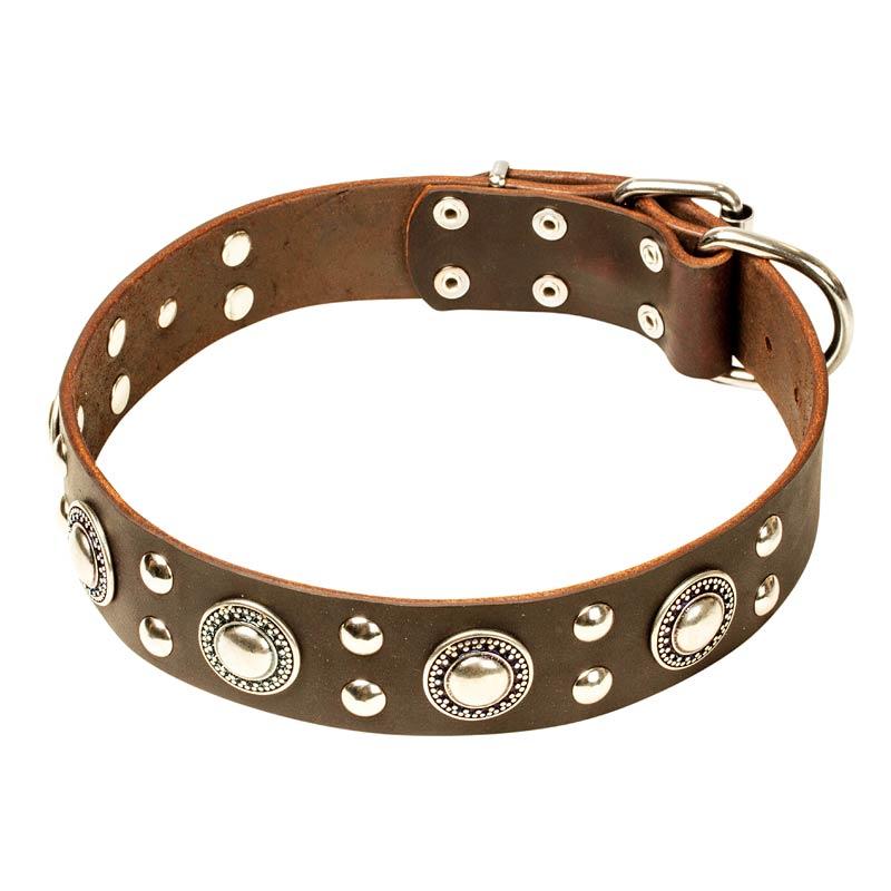 Collier pour chien original en cuir rock n roll c7 - Collier pour chien original ...