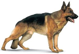 Boutique harnais pour chiens
