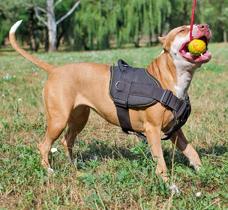 Harnais robuste en nylon pour chien Pitbull - H12
