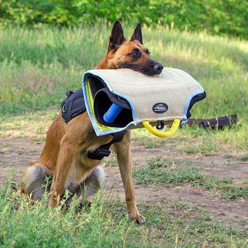 Manchette de mordant pour travail avec jeune chien